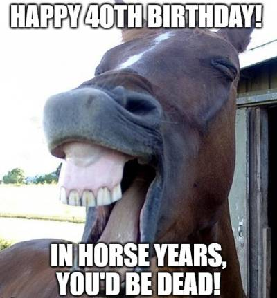 20 Funny Birthday Wishes For Horse Lovers Funny Birthday Wishes