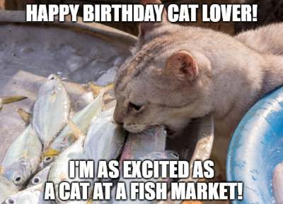 Happy Birthday Cat Lover Im As Excited A At Fish Market