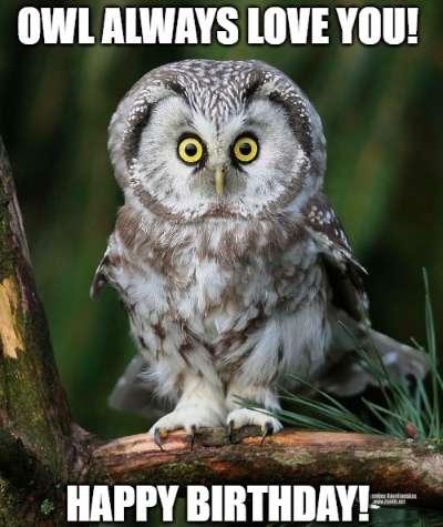 25 Best Memes About Owl Birthday Owl Birthday Memes